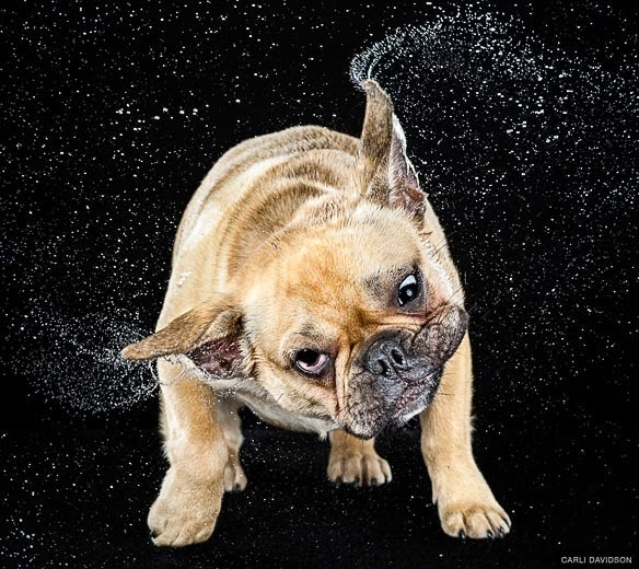 dogs-shake-it-up-in-slow-motion11